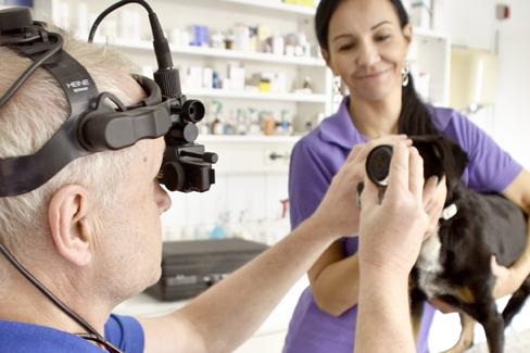 Indirekte Ophthalmoskopie zur Beurteilung der hinteren Augenabschnitte