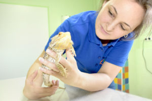 Untersuchung eines Reptils durch Fachärztin