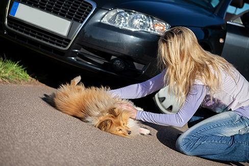 Frau hilft einem verletzten Hund, der vor einem Auto liegt